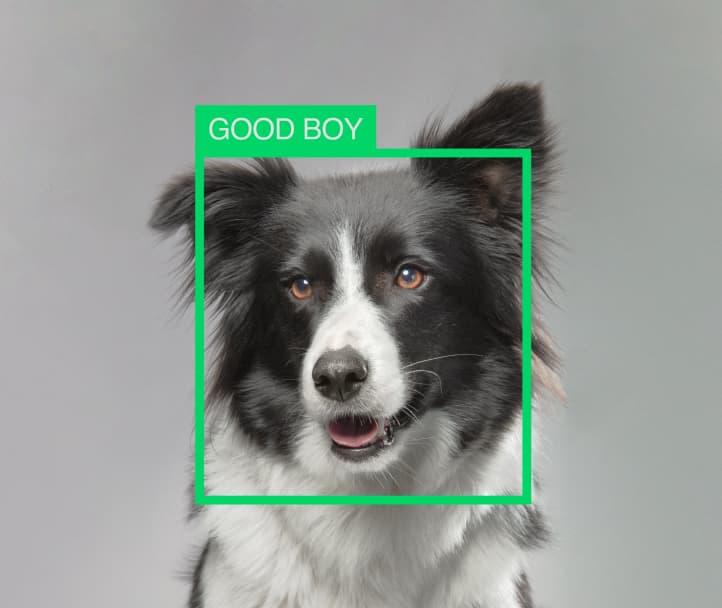 Petcube - The Smartest Pet Cameras For Cats & Dogs  Alexa