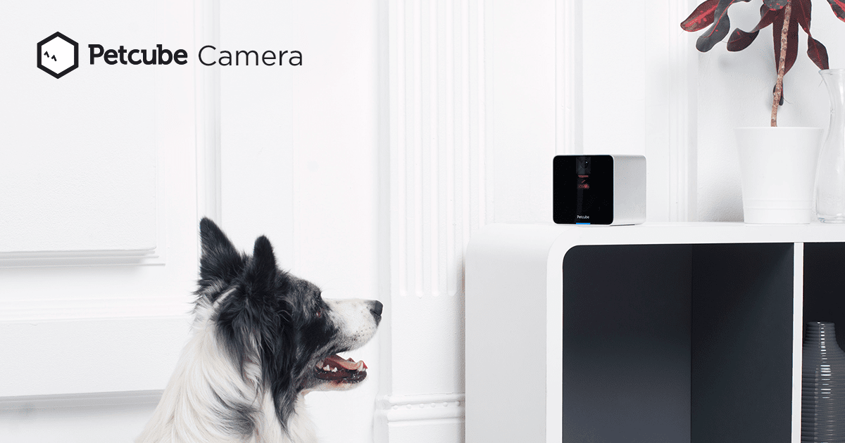 Petcube Camera | Store | Petcube: Remote Wi-Fi Pet Camera