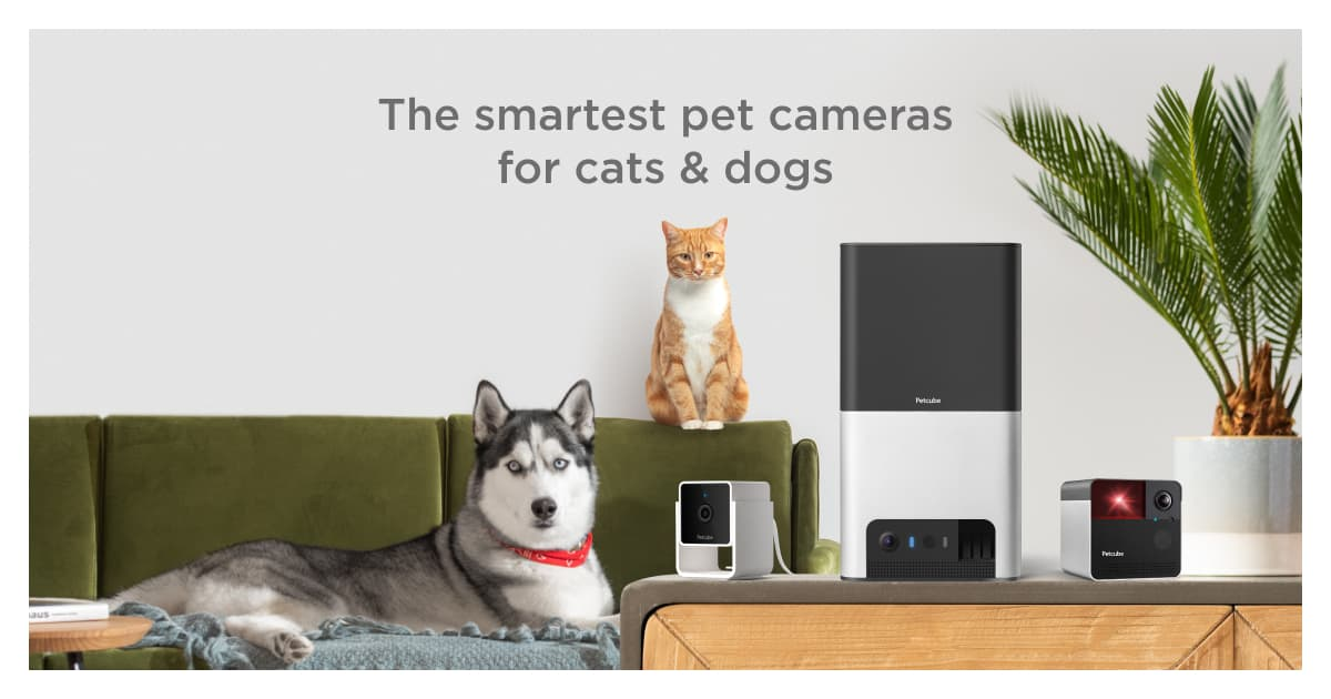 Petcube Store: Pet Cameras, Food & Supplies for Dogs & Cats
