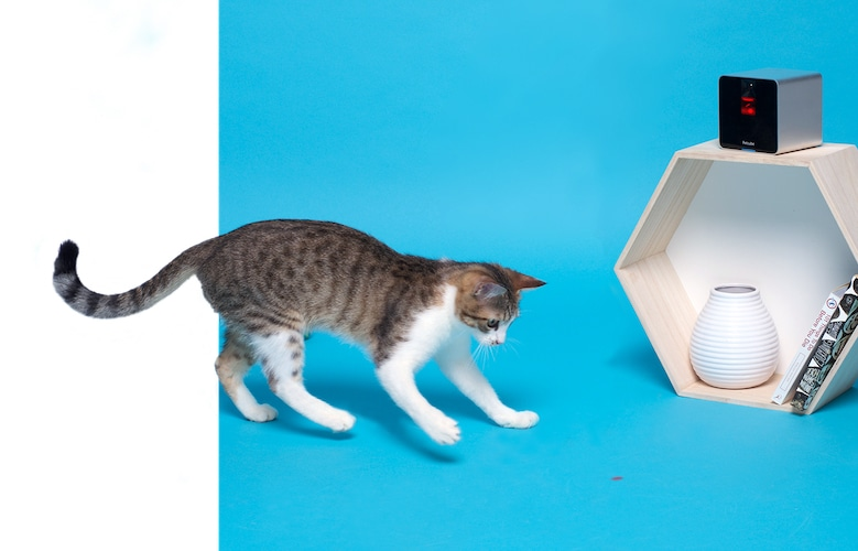 Play with animals with built-in safe laser toy