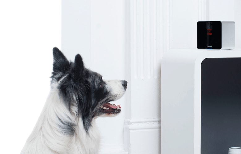 Talk to your pets using 2-way audio