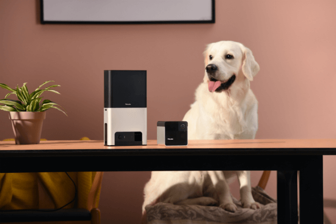 Image result for dog listening to alexa