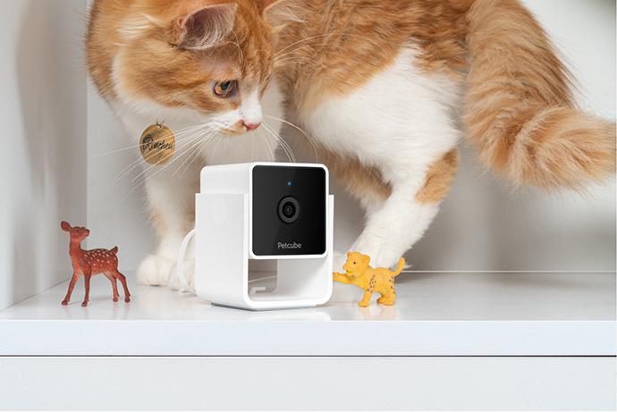 a cat and a Petcube Cam
