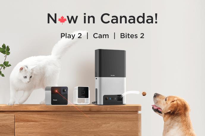 Petcube cameras now in Canada